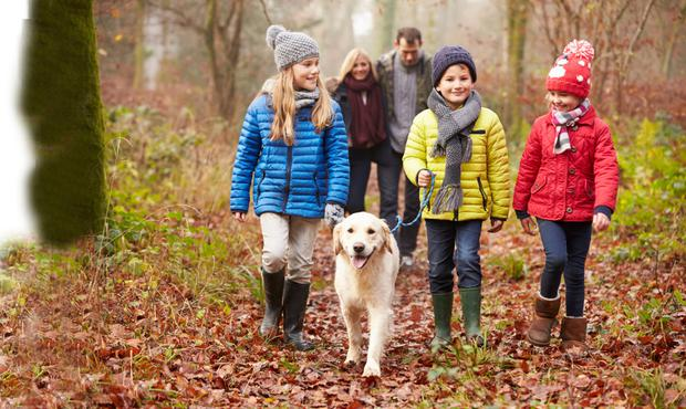 Ireland's 30 best autumn walks - with a cosy meal or pint at