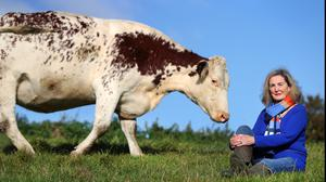 Marianne Heron gets up close and personal with Anna the cow. Photo: Steve Humphreys