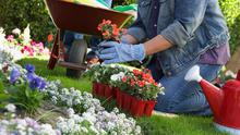 BLOOM TIME: Plant out summer bedding, just make sure any plants have been hardened off first