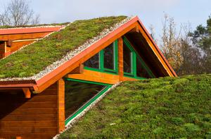 Green living roof