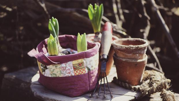 Now is the time to plant spring bulbs