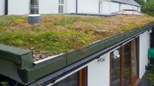 CAREFULLY DONE: Living roofs can be important refuges for wildlife