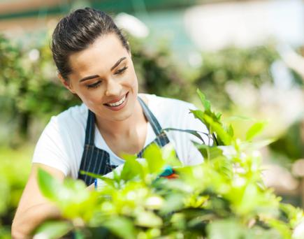 Choose plants that have a repeated harvest