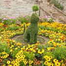 Gold rush: Various yellow flowers make an impression at Belfast castle