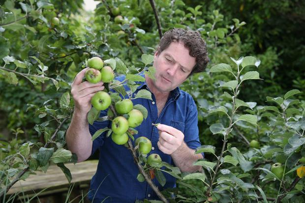 Diarmuid Gavin at work in his own garden. Photo: Fran Veale