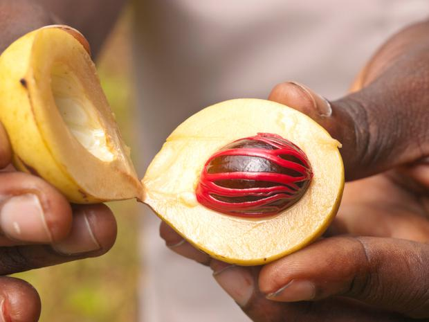 Nutmeg is the seed of Myristica fragrans, a tree notable for producing more than one spice - the covering of the seed is harvested to produce mace.
