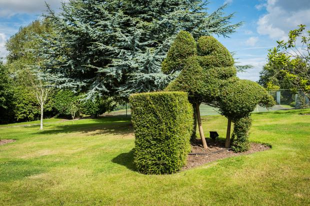 Topiary hints at the owners' interests