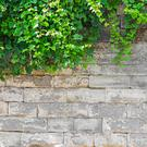 Building garden walls can cause neighbourly strife