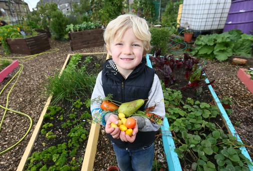 Little plotters: Conall Galvin (four) from Dublin's North Strand pictured in Mud Island Community Garden. Photo: Frank McGrath