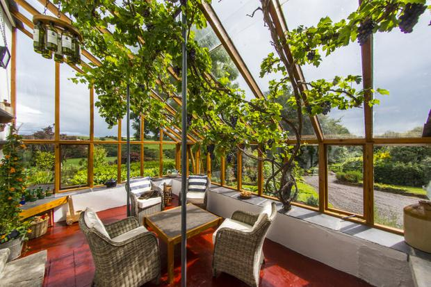 The lean-to conservatory has a grape-laden vine