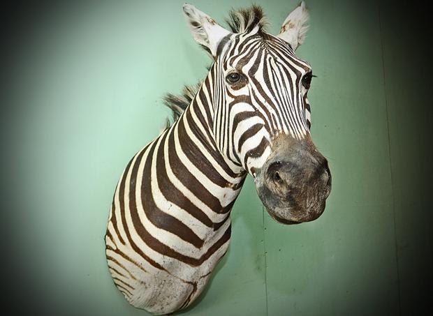 The zebra head which sold for €1,600