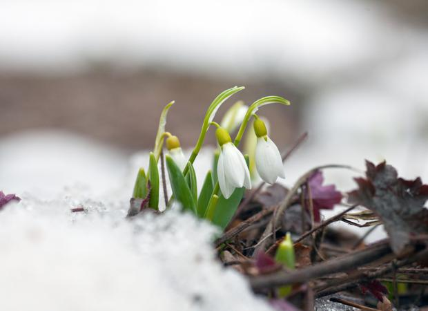 Plenty of little bulbs had been popping up