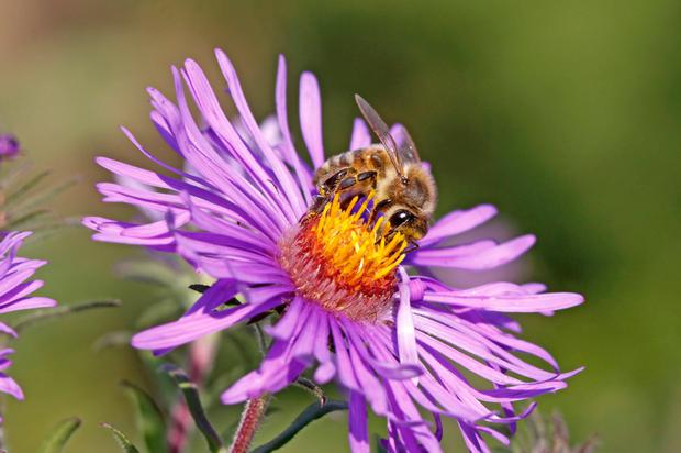 Flowers are producing less nectar during the heatwave