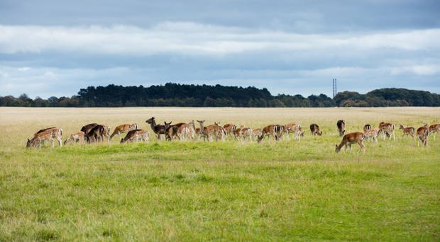 Dublin's Phoenix Park is one of two parks in the world to get prestigious gold award