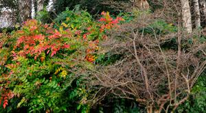 SEASONAL SHUTDOWN: The last of the leaves have fallen and the garden will not change much from now until spring