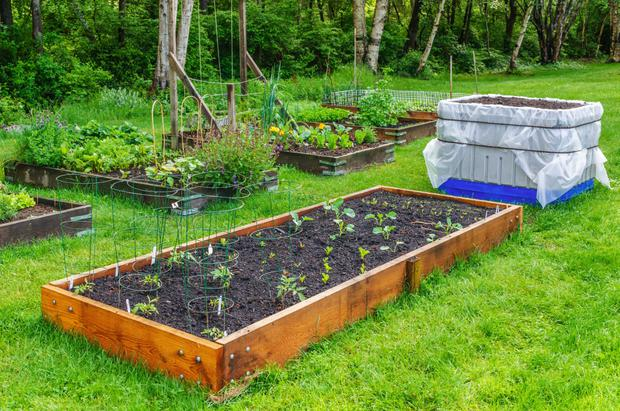 Raised beds add decoration to your garden but harbour slugs and snails – are they worth the expense?