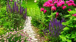 One of the reasons that perennial flowers have become so popular is that they do not have to be planted each year