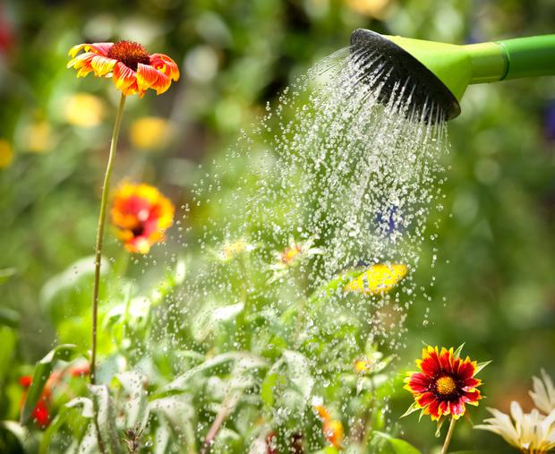 'Prioritise your watering'