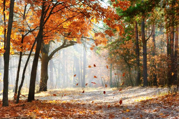 'For me, autumn is the best of seasons - the gorgeous russet colours, the early morning chill, the crunch of leaves underfoot, the whiff of burning peat in the air, the slow dying of the evening light' (stock photo)