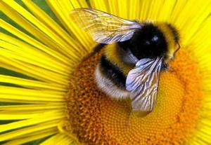 Bees hog the limelight — but moths, butterflies and many other animals are needed for pollination