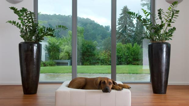 CUBE dog bed by www.pet-interiors.co.uk