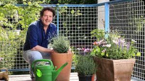Top choices: Diarmuid Gavin pictured in his garden at his home at Kilmacanogue, Co Wicklow. Photo: Frank McGrath