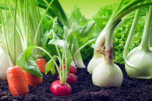 March is the time to think about growing your own veg