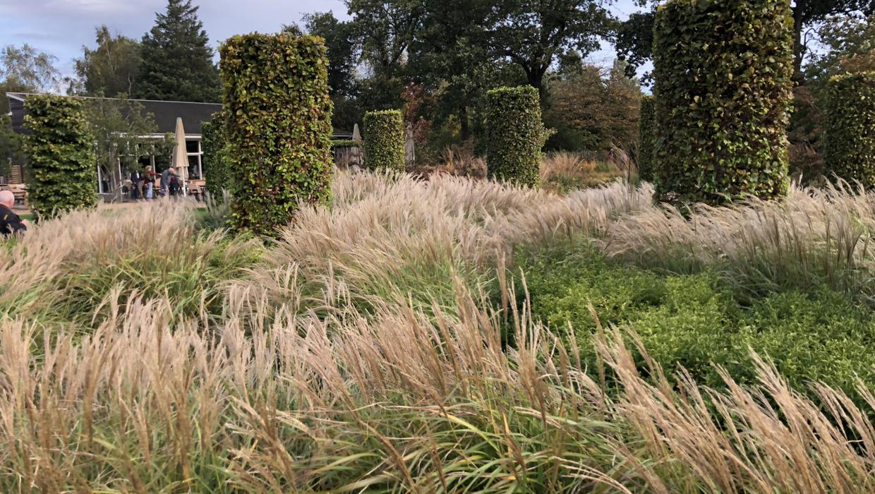 Gorgeous Grasses Diarmuid Gavin On The Best Ornamental Grasses For Autumn Independent Ie