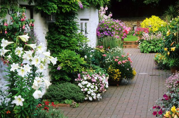Diarmuid Gavins Top Advice To Achieve Cottage Charm In Your Garden