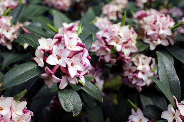 Gardening With Diarmuid Gavin Your Garden Can Give Off The Most