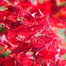 Weather conditions mean autumn leaves are especially colourful this year