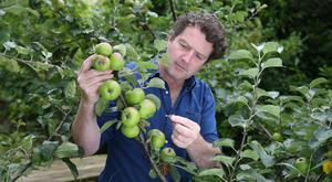 Diarmuid Gavin checks on an applet tree. Photo: Fran Veale