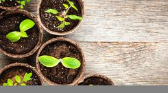 Now is the time to consider the propogation process