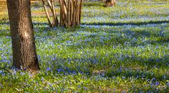 Over time, the bulbs you plant will reproduce in the soil conditions that suit them best — nature's cheap solution to a tight budget