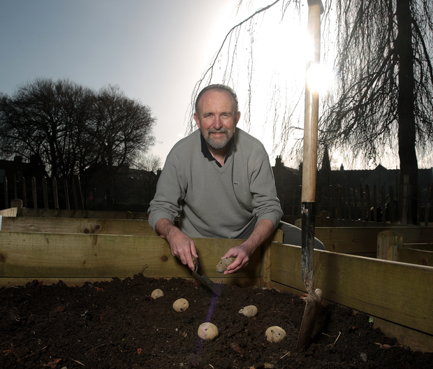 GERRY DALY: It's worth sprouting, or chitting, potatoes before planting, as this brings harvest forward