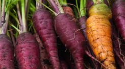 Carrots come in all shapes, sizes and colours