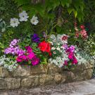 'Bedding plants can be chosen according to several different criteria.'