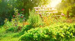 'Every garden should have at least one place to sit and admire your handiwork.' Stock image