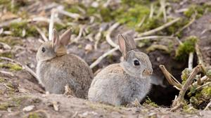"""""""There's no point in netting stuff, as the rabbits will just burrow down to get it."""""""