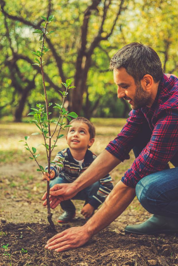New Year, new leaf: give your garden a 2020 makeover