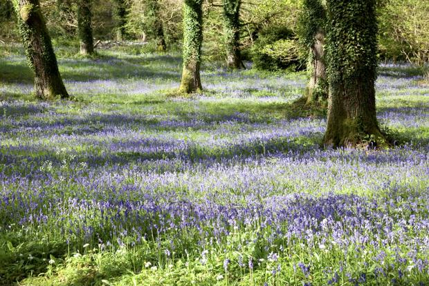The estate has some of Ireland's most ancient native woodlands