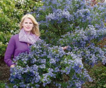 Marie with showstopping ceanothus