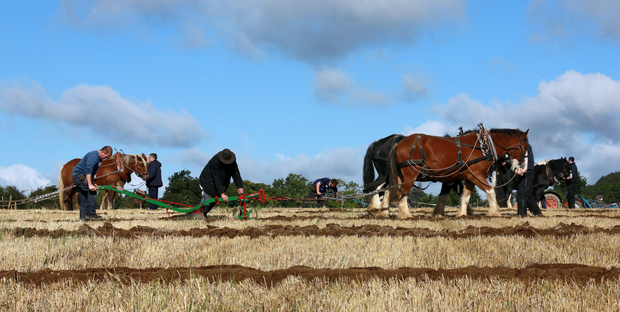 Independent News and Media are hosting a series of events throughout the week at the Ploughing Championships (Stock picture/Frank McGrath)