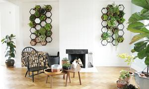 Horticus modular living wall  large kit with extras