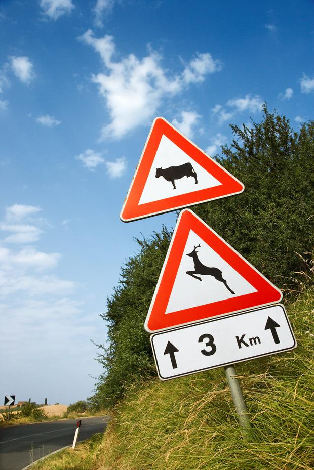 Caution should be exercised when passing animals on the road.