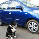 Paws for thought: Sam sits proudly by his 2012 Hyundai i10 which passed its first NCT last Monday