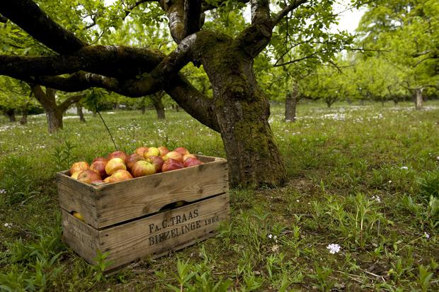 The Apple Farm - camping in Tipperary