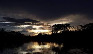 The Amazon rainforest in Ecuador. Photo: Steven Dunne / Twitter / @stevenevetsd
