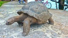Officer called the tortoise 'aggressive'