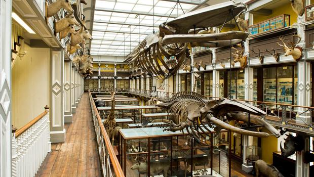 The Dead Zoo - Dublin's Natural History Museum